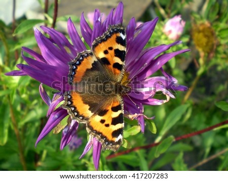 Butterfly on a blue flower