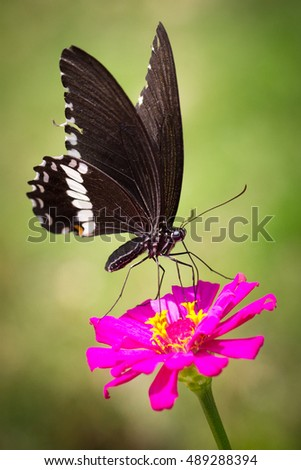 Butterfly on a bright pink flower (focus on butterfly)