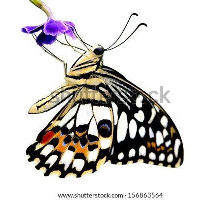 Butterfly on a flower isolated on white background - stock photo