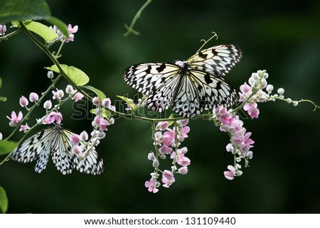 Butterfly on a flower, Thailand, Phuket - stock photo