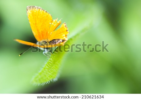 Butterfly on a leaf./Butterfly - stock photo