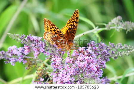 Butterfly On A Purple Flower In The Gardens Of Daniel Stowe Botanical Garden,  Belmont,