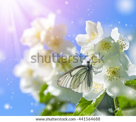 Butterfly on  branch of jasmine in the sunshine - stock photo