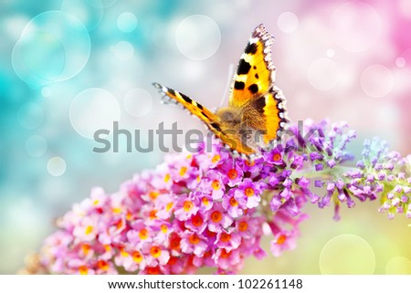 butterfly on colorful flower and bokeh light effect background - stock photo