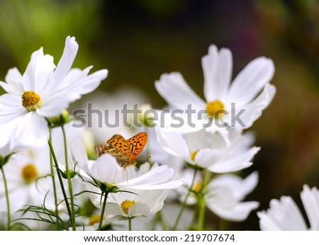Butterfly on daisies - stock photo