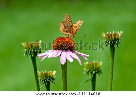butterfly swingerclub modele hamburg