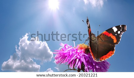 butterfly on flower against blue cloudy sky with sun - stock photo