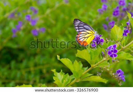 butterfly on flower -Blur flower background - stock photo