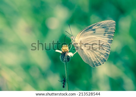 Butterfly on flower isolated calm