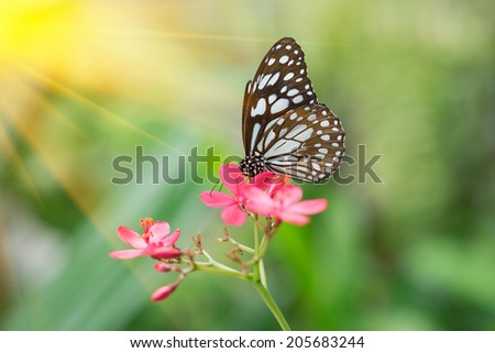 Butterfly on flower with sunray - stock photo