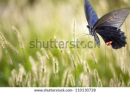 butterfly on flowers for adv or other purpose use - stock photo