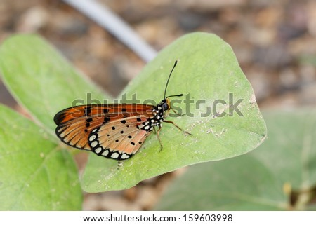 Butterfly on green leaves