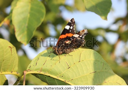 Butterfly on green leaves close up - stock photo