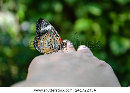 Butterfly on human female finger and hand: Beautiful butterfly on woman hand on blurred green bokeh background of garden: Natural ecosystems of eco living concept with freedom  and clean environment