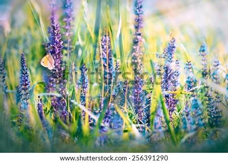 Butterfly on meadow purple flowers - stock photo