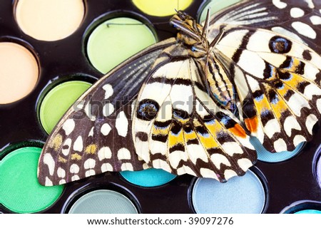 Butterfly on professional make -up eyeshadows