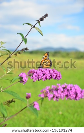 Butterfly on Purple Flower Mountains in Background