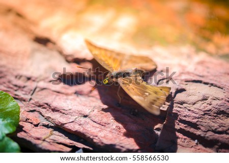 Butterfly On Rock With Warmlight