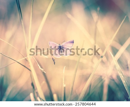 Butterfly on the blade of grass - stock photo