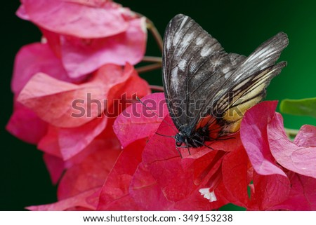 Butterfly on the flower - stock photo