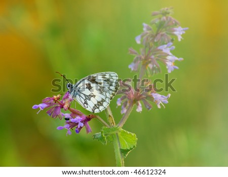 Butterfly on the flower morning