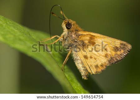 butterfly on the green leaf - stock photo