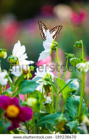 butterfly on the nature - stock photo