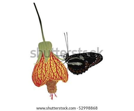 Butterfly on the side of an exotic flower - stock photo