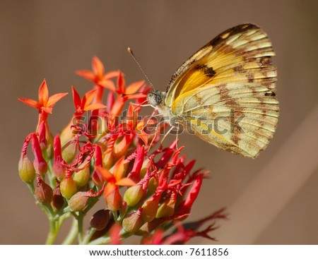 Butterfly on wild flowers - stock photo