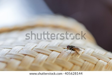 butterfly on woven bamboo  - stock photo
