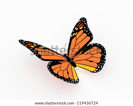 Butterfly orange isolated on white - stock photo