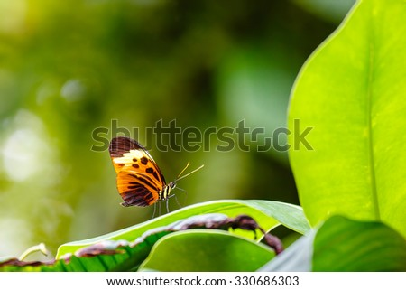 Butterfly outdoor on flower