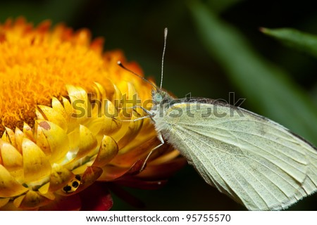 Butterfly perched on a flower - stock photo