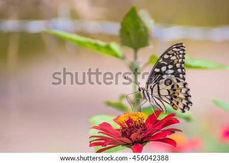 Butterfly perched on a flower naturally