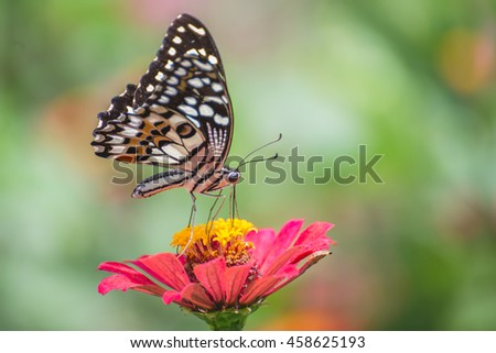 Butterfly perched on a flower naturally.