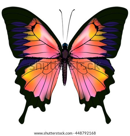Butterfly. Pink, red and yellow color butterfly isolated illustration on white background. Nonexistent butterfly zoology specimen - stock photo