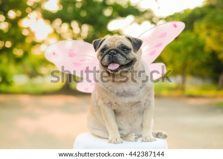 Butterfly pug.(fawn fat pug dog wearing butterfly wings costume with blurry sunlight background.) - stock photo