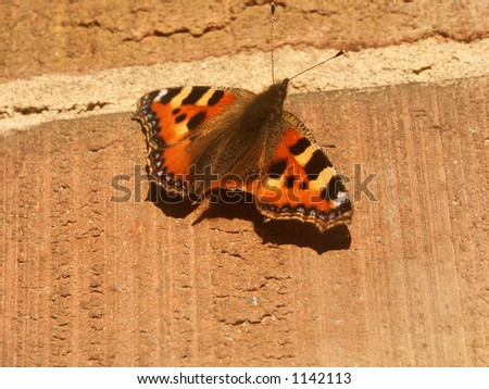 butterfly resting on a brickwall - stock photo