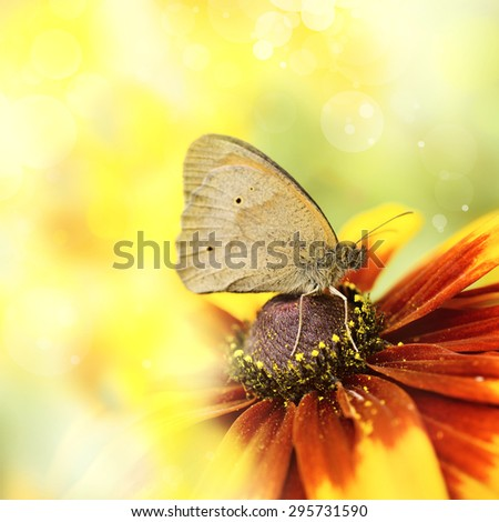 butterfly resting on the flower