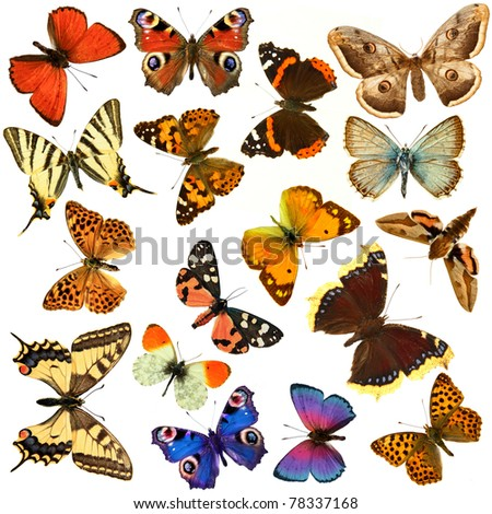 Butterfly's, in the white background - stock photo