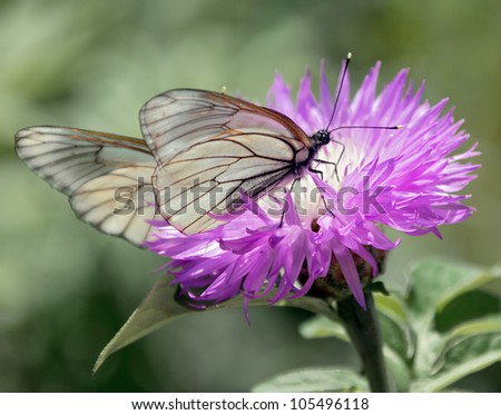 Butterfly sitting on a beautiful pink peony - stock photo