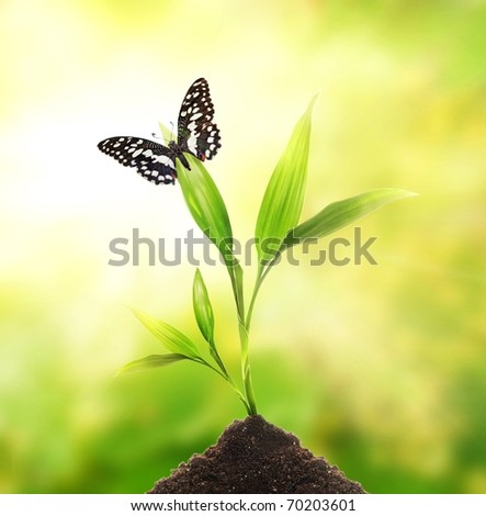 Butterfly sitting on a young plant - stock photo