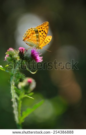 Butterfly sitting on flower  - stock photo