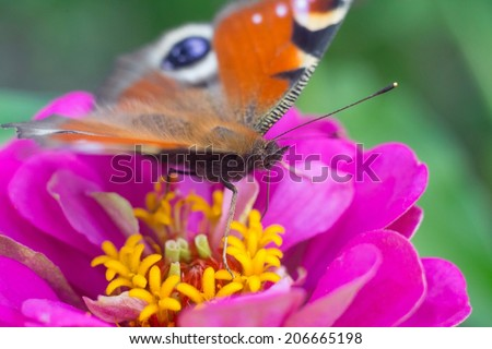Butterfly sitting on pink flower - high point