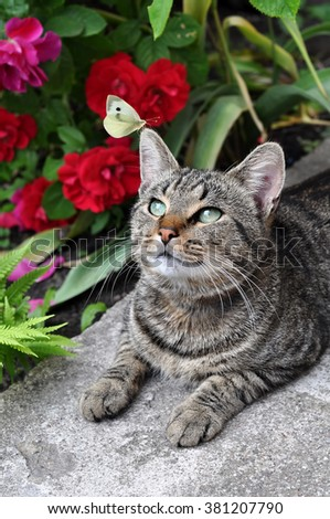 butterfly sitting on tabby cat