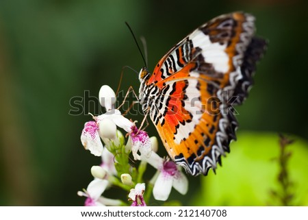 Butterfly sitting on the flowers - stock photo