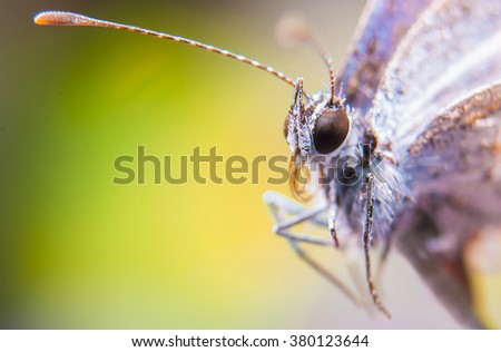 butterfly, spring, butterfly eyes, wild, nature, macro butterfly - stock photo