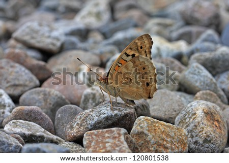 butterfly stay on the rock