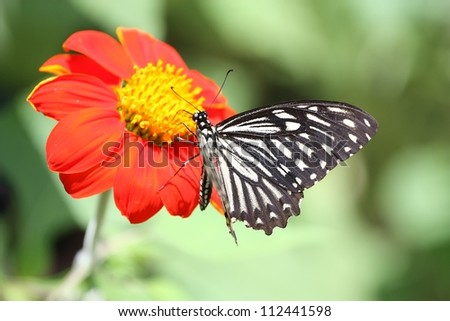 Butterfly sucking nectar from a red flower - stock photo