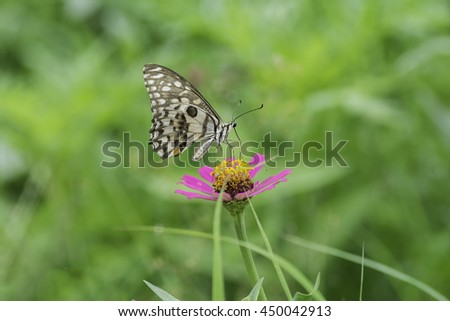 Butterfly sucking nectar from pink flowers .